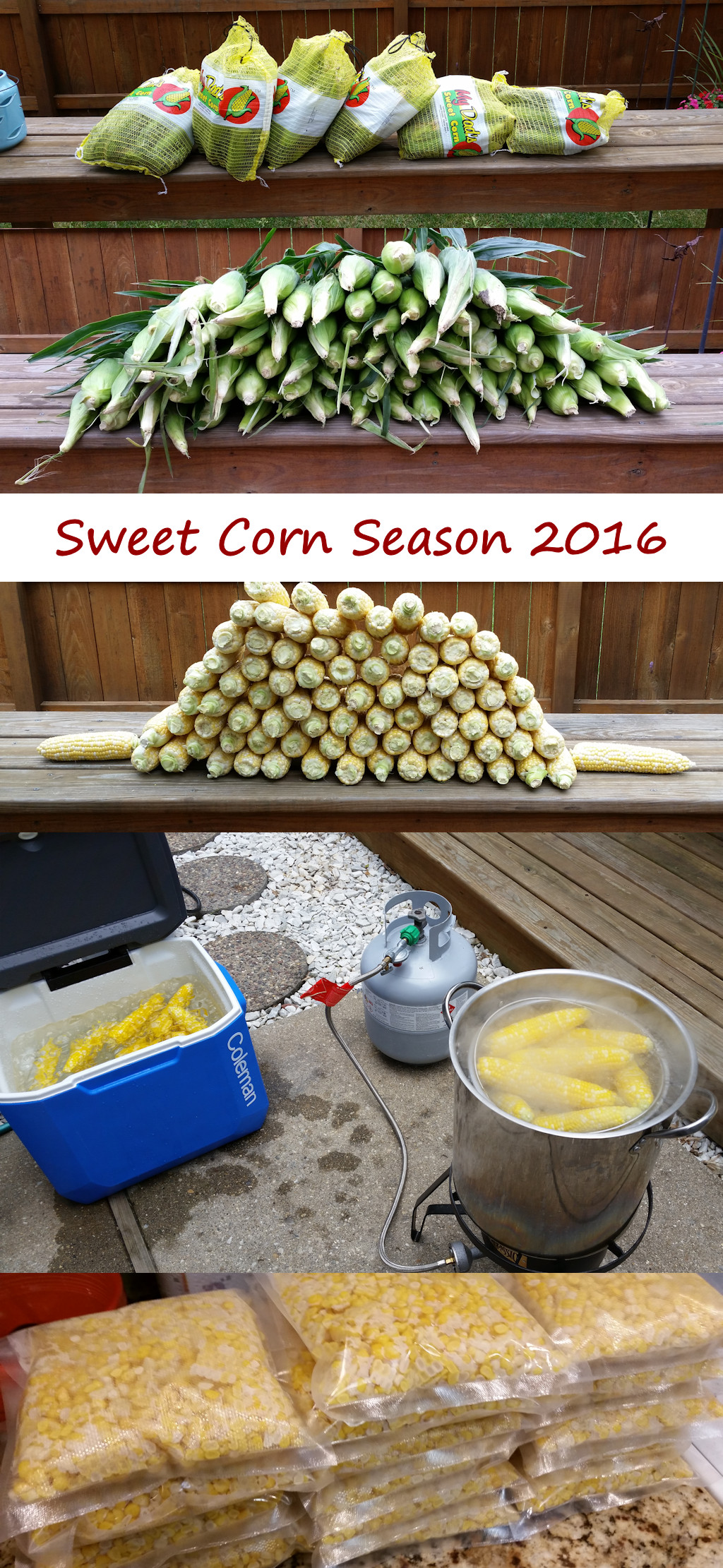 Sweet Corn Season 2016