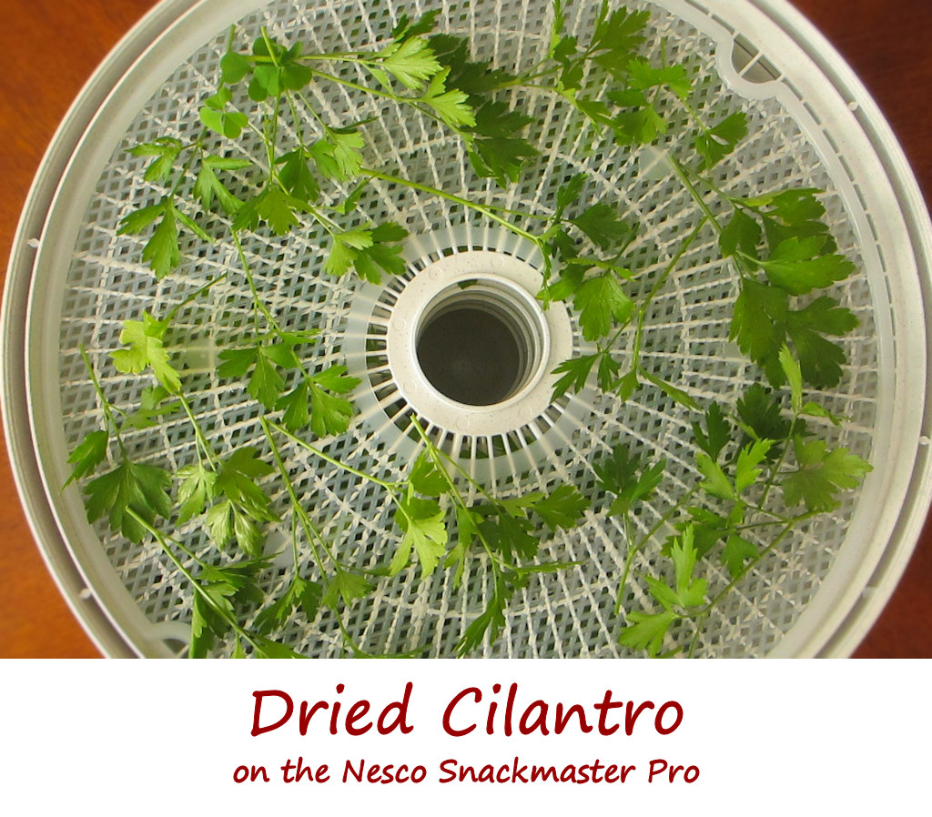 Dried Cilantro on the Nesco Snackmaster Pro