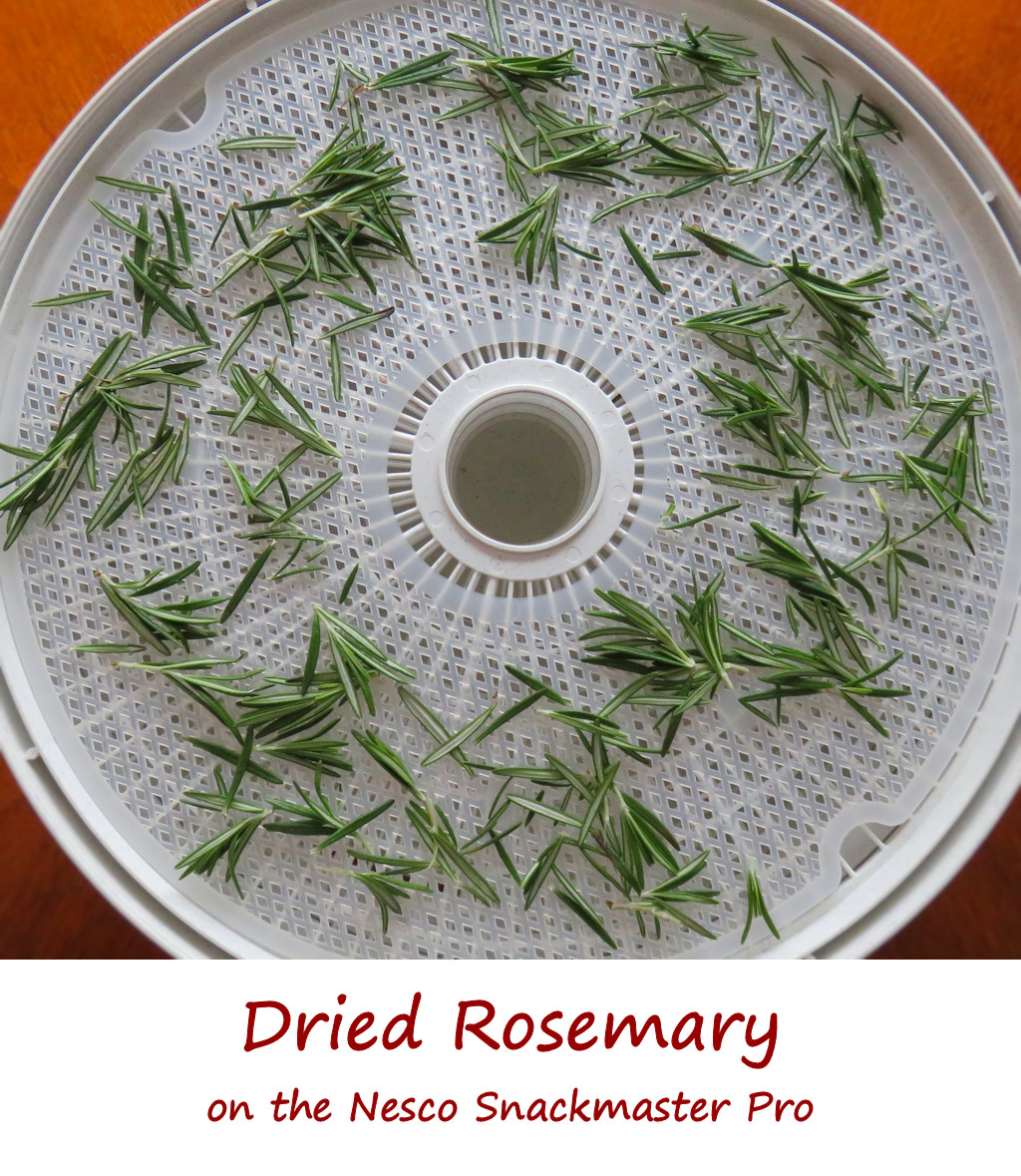Dried Rosemary on the Nesco Snackmaster Pro