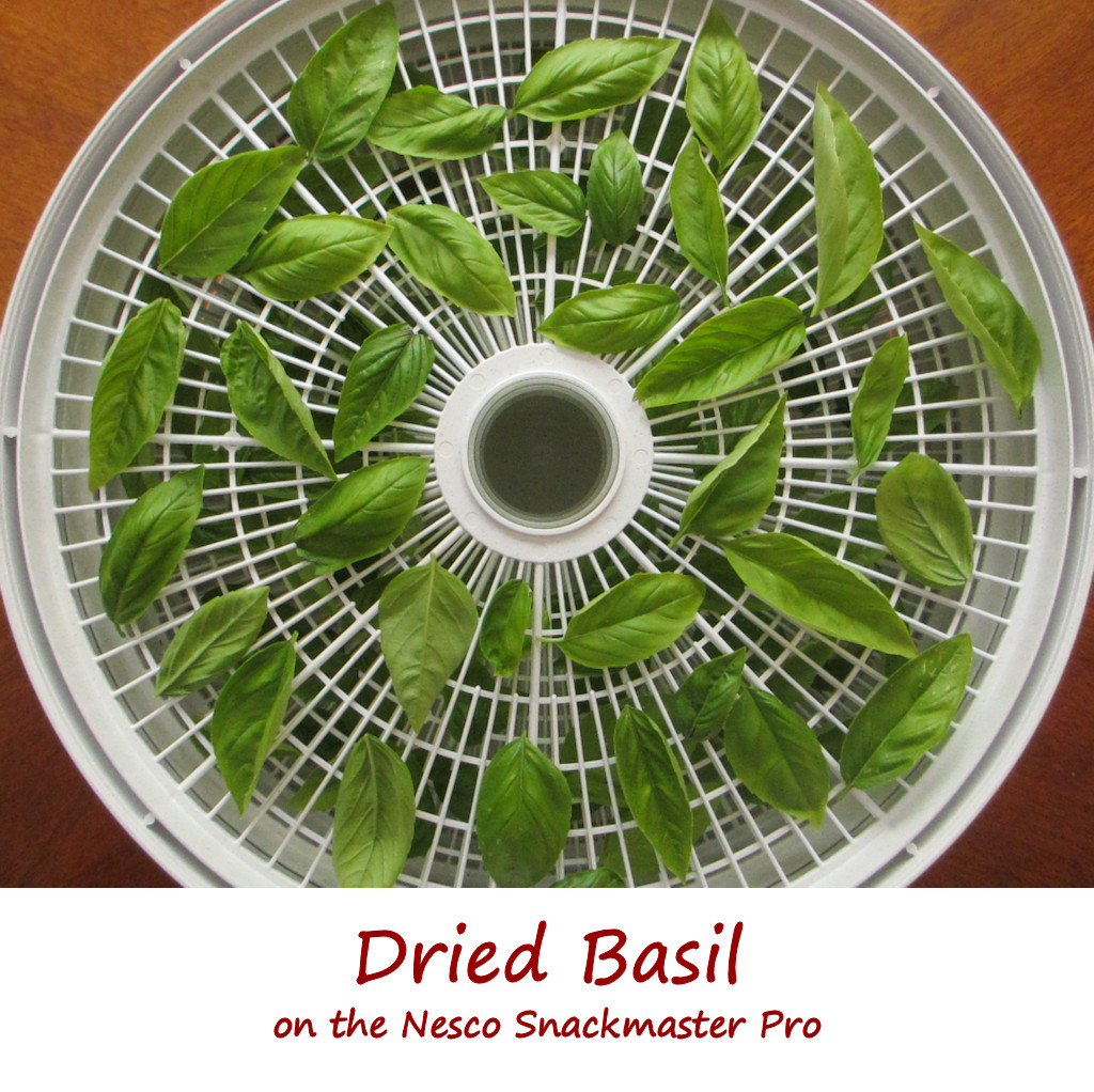 Dried Basil on the Nesco Snackmaster Pro